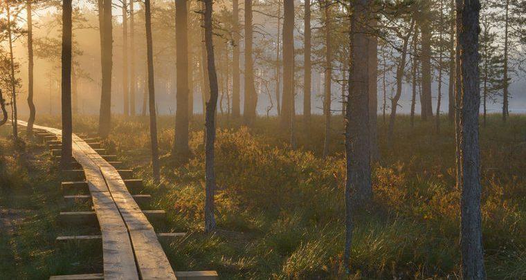 Reisid looduses, Loodus reisid, Reisid looduse- ja kultuurihuvilistele, Bussireisid, Bussireisid eestis, loodus reisid, Bussireisid